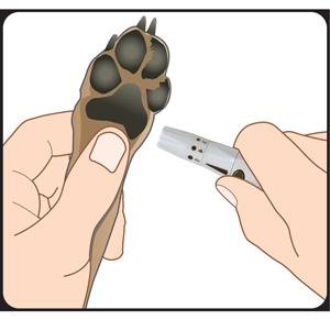 Dog Paw Lancing Device Testing Site