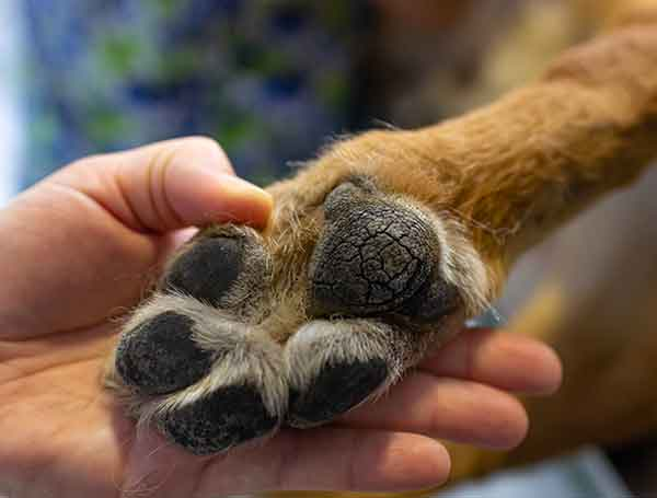 Dog Paw Testing Site